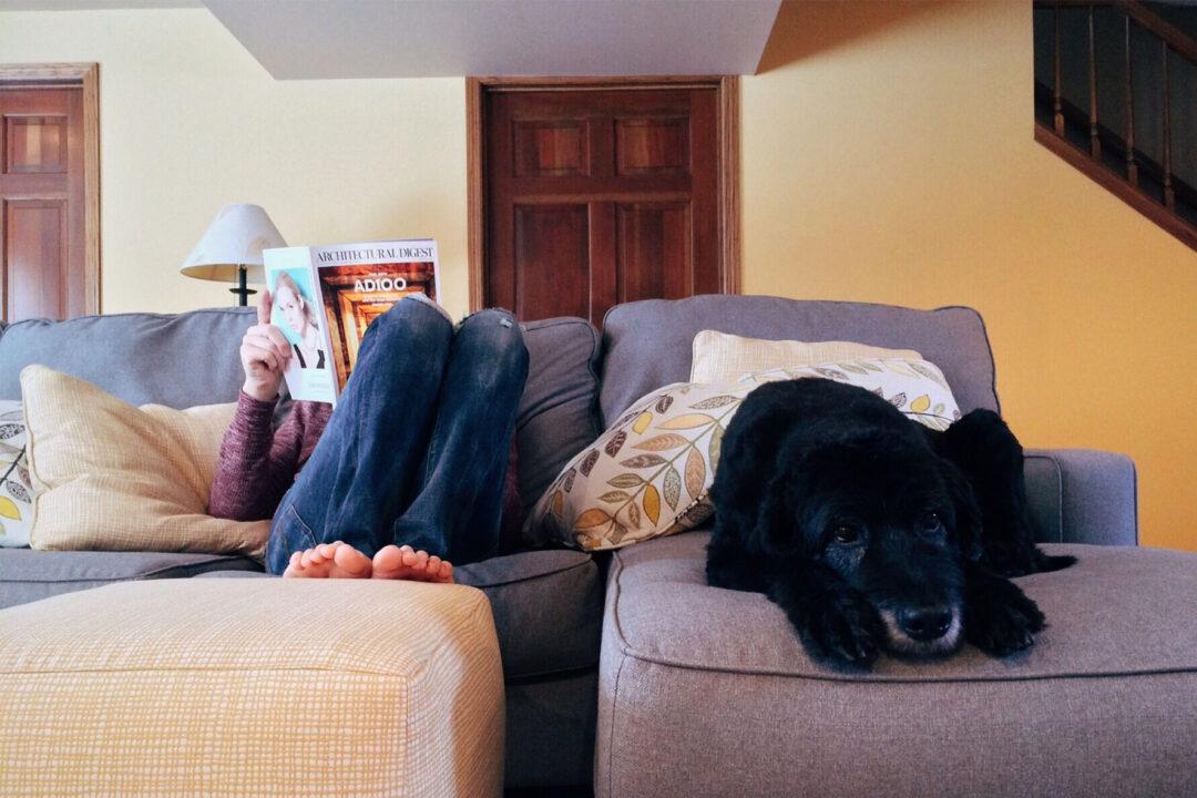 Casa con mascotas